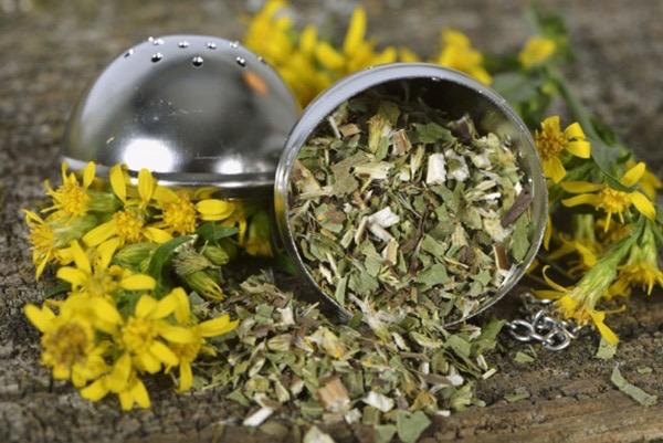 Teatojásban szárított aranyvessző (Solidago virgaurea), mellette a friss gyógynövény sárga virágai.