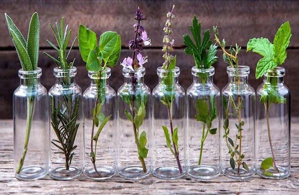 Különféle gyógynövények hosszú üvegcsékben, melyeket be lehet vetni lábduzzanat ellen.