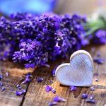 Meseszép és illatos: levendula
