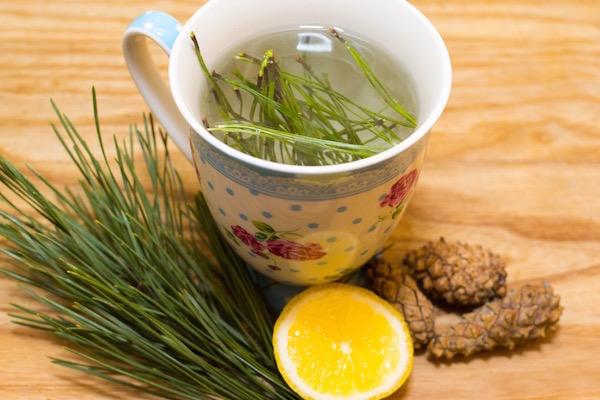 Fenyőtűlevél-tea készítése.