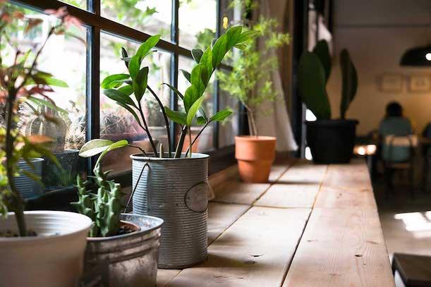 Nappali ablakában szobanövények.