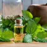 A citromfűolaj jótékony hatásai