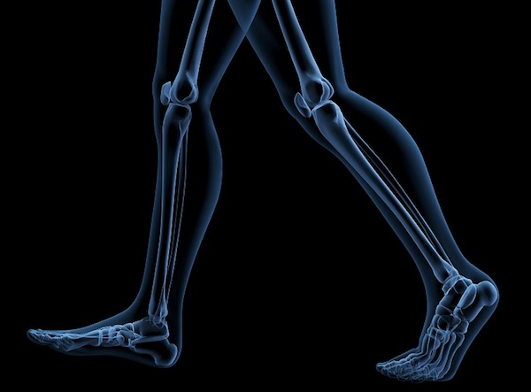 Gyaloglás közben a csontok elhelyzkedésének bemutatása.