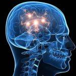 Az agy kémiája és az emberi viselkedés