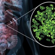 Az alacsony rosttartalmú táplálkozás károsítja a bélbaktériumokat