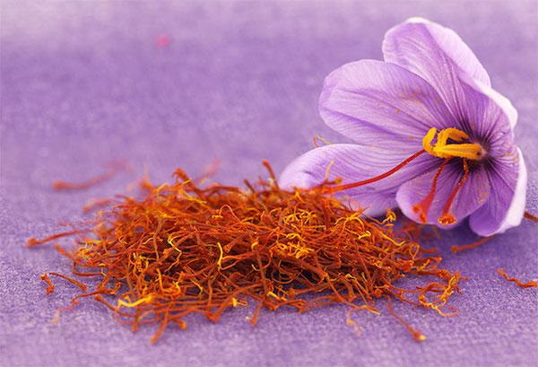 Crocus sativus lila virága a 3 draba bibeszállal, mellette rengeteg bibeszál, a sáfrány alapanyaga.