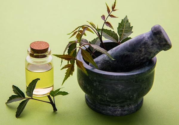 Neemfa ága mozsárban és a belőle készült neemolaj kis üvegbe töltve.