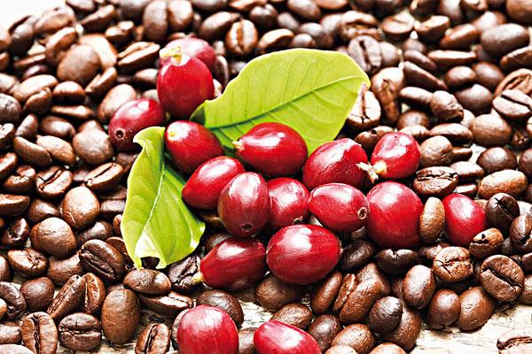 A kávé (Coffea arabica) nem volt ismeretlen már az ókor embere számára sem.