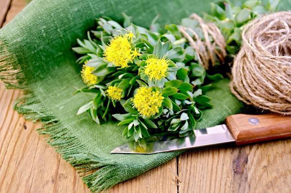 Zöld textilszalvétán egy csokor aranyvessző spárgával átkötve, mellette kés és spárga.