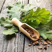 Egy ősi gyógyszer: tölgyfakéreg és tölgyfalevél