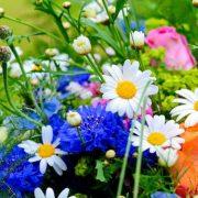 Virágok nyelve