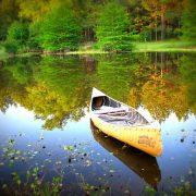 Természetterápia: a természet gyógyító ereje