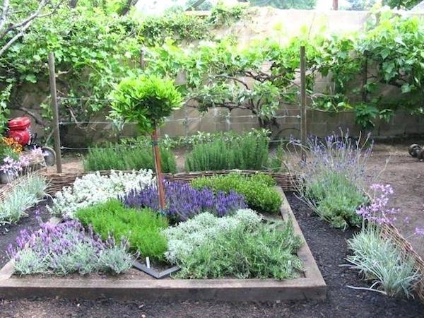 Gyógynövényes rész a kertben formákba rendezve.