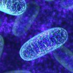A betegség visszafordításának kulcsa a sejtek egészségének javítása