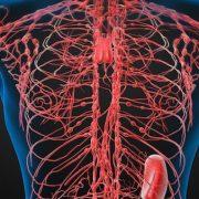 Módszerek a nyirokrendszer stimulálására és az immunrendszer működésének növelésére