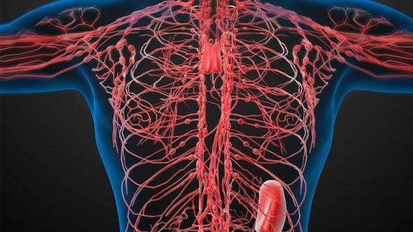 Nyirokrendszer ábrázolása pirossal egy sematikus emberi felsőtestben.