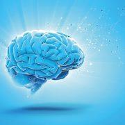Óvja az agy egészségét négy tápanyaggal!