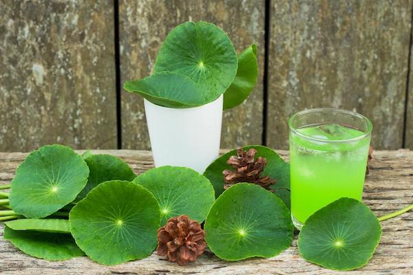 Ázsiai gázló (Centella asiatica) kivonatát tartalmazó ital, mellette a gyógynövény kerekded levelei.