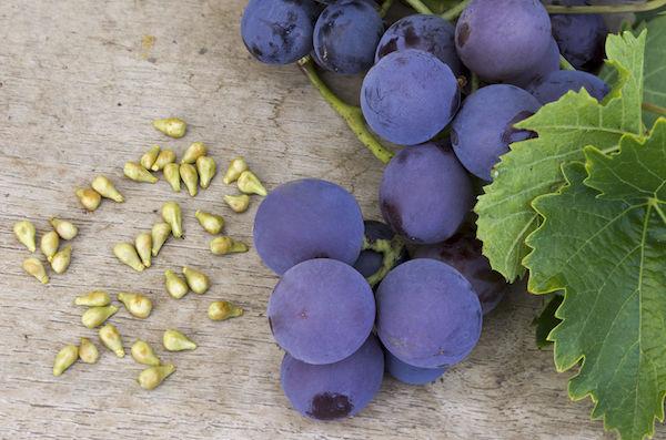 Kék szőlő, mellette szőlőmagok – a rezveratrol forrásai.