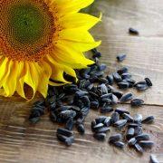 Az ősz kincse: napraforgómag