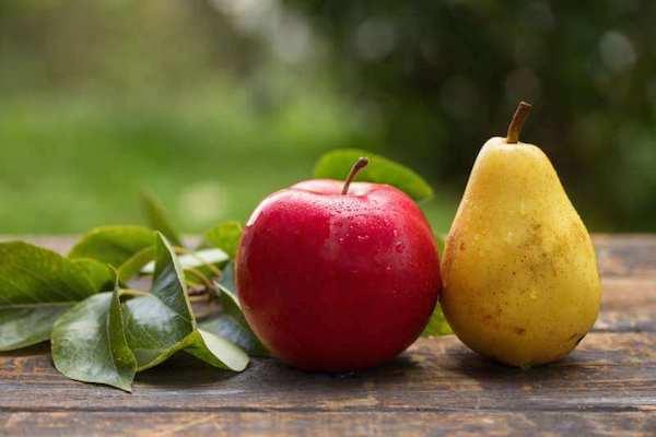 Egy alma és egy körte egymás mellett.