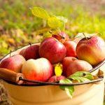 A szívbarát gyümölcs: alma