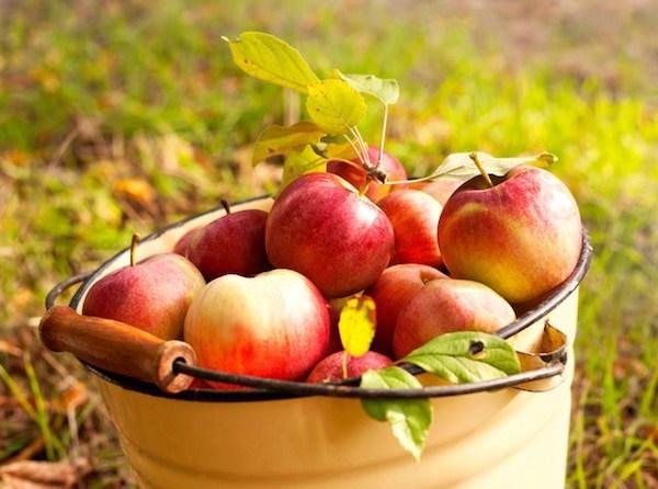 Egy nagy zománcos vödör teli almával.