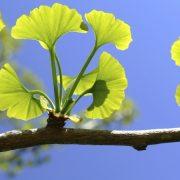 Gyógynövényekkel a stressz ellen