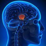 Természetes módszerek a hipotalamusz funkciójának növelésére