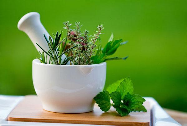 Különféle gyógynövények porcelán mozsárban, törővel.