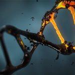 A koenzim-Q10 önmegsemmisítésre programozhatja a rákos sejteket