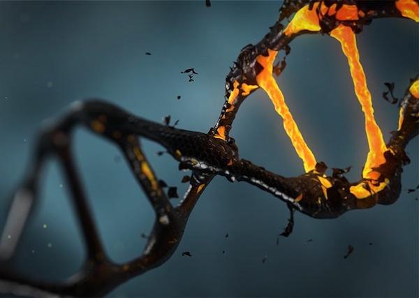 DNS szerkezete.