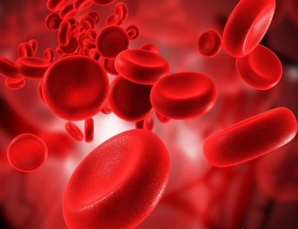 Vörösvértestek keringése a vérben.