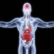 Az egészséges bélrendszer lehet a kulcsa a jobb agyi egészségnek