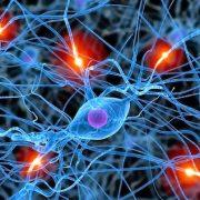 Intuíció, logika, hormonok