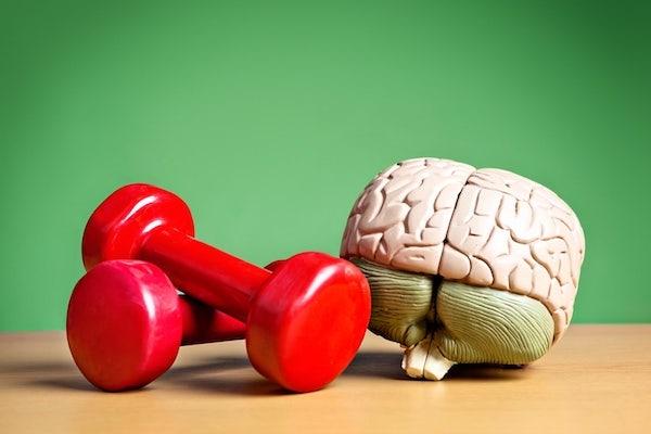 Piros kézi súlyzók egy emberi agyat formázó makett mellett.