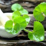 Ájurvédikus gyógynövények, amelyek lassítják az öregedést