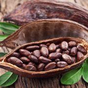Szupertáplálék, amely növeli az energiát: kakaóbab