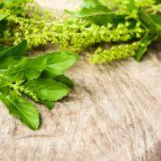 Adaptogén gyógynövények a stressz legyőzésére
