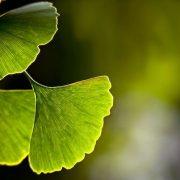 Gyógynövények kedvező hatása az artériákra és a vérkeringésre