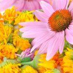 Használjon vírusellenes gyógynövényeket az immunrendszer fokozására!