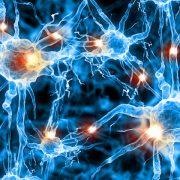 A központi idegrendszer reagál a toxinokra