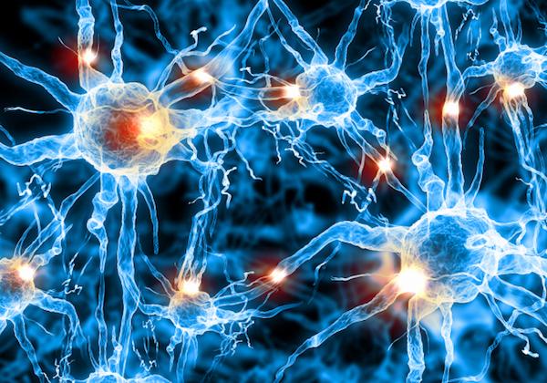 Központi idegrendszer nyúlványai.