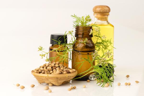 Koriander növény, a magja és a belőle készült olaj egymás mellett.