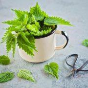A fertőzés és az artritisz természetes gyógyszere: csalán