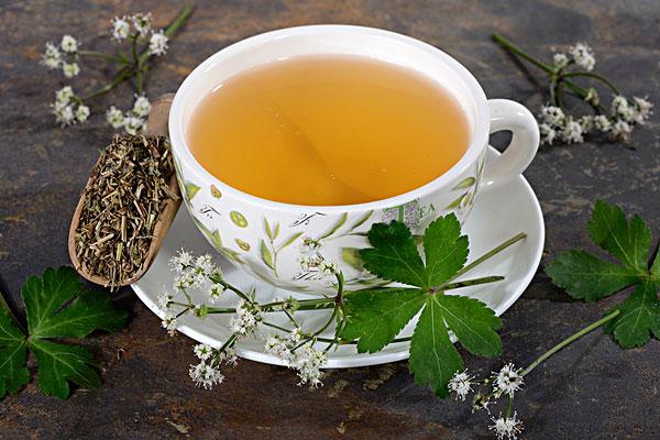 Európai gombernyő virága, levele, és a szárított formájából készült tea.