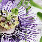 Hatékony gyógynövények menopauza előtt és után