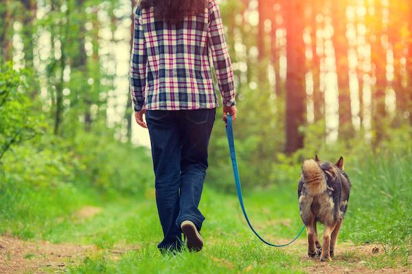 Kutyáját sétáltatja az erdőben egy hölgy.