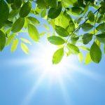 Nyár és D-vitamin