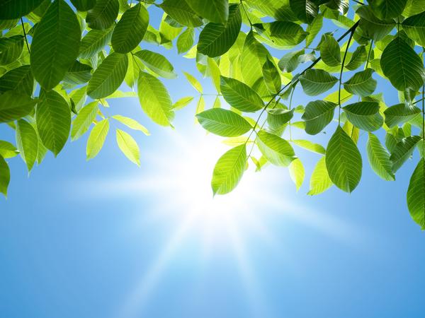 Napfény süt át a fa levelei között.